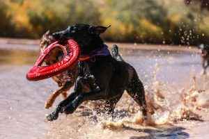 Sports canins chiens
